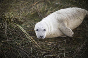 Sign, seal, deliver: Seal pups make their debut